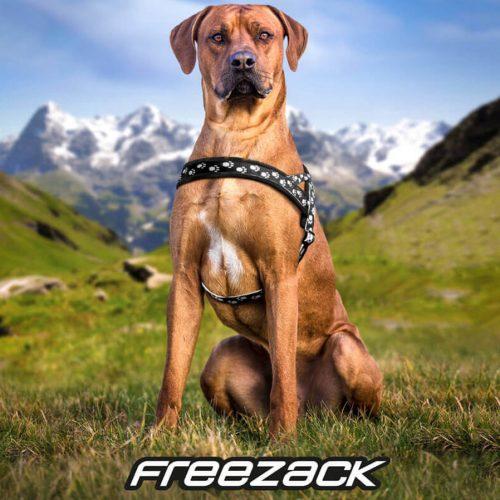 freezack-nordic